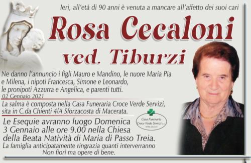 Rosa cecaloni